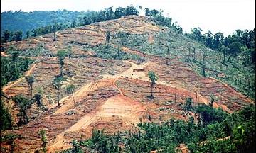Penyelewengan-Ladang-Rakyat-Di-Kelantan-Terbongkar